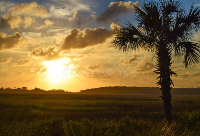 Silhouette of Tree During Sunset stock image
