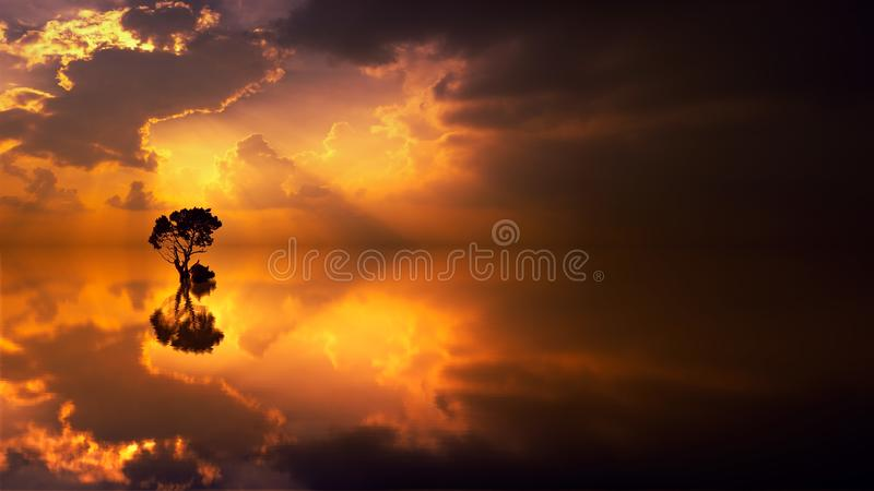 Silhouette of a Tree during Sunset stock image