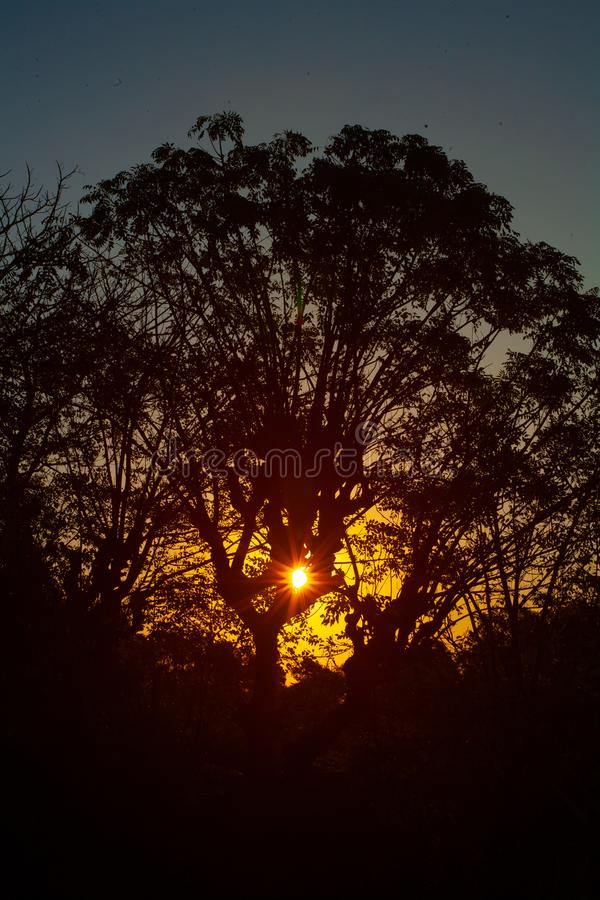 Silhouette of a tree on sunset. A silhouette of a tree during the sunset royalty free stock images