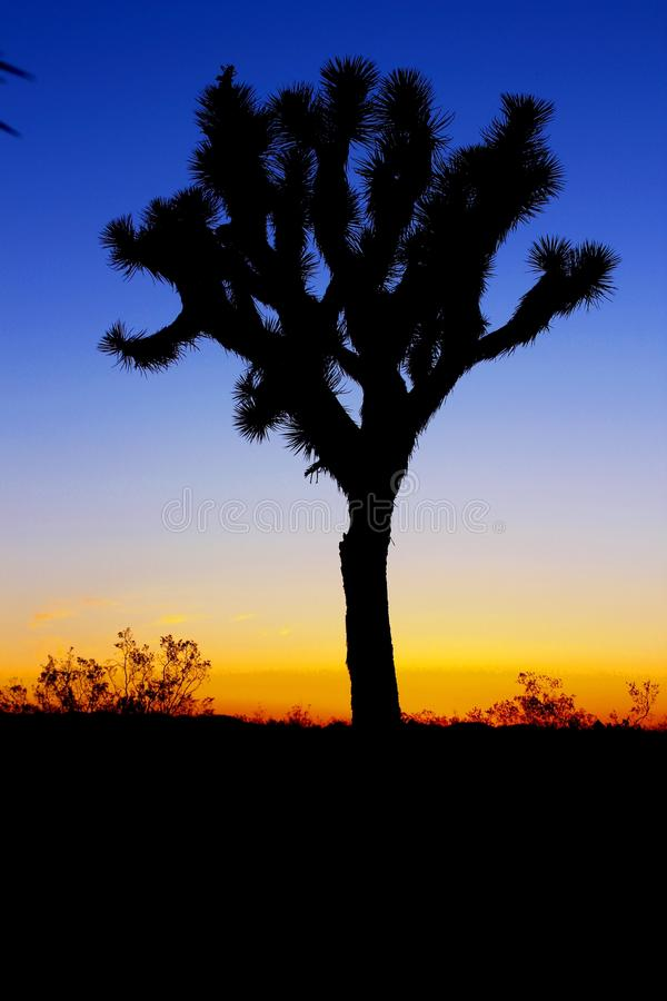 Silhouette Of Tree During Sunset Free Public Domain Cc0 Image