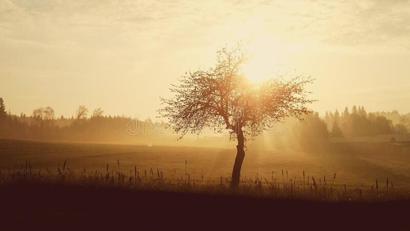 Silhouette of Tree during Sunset stock photography