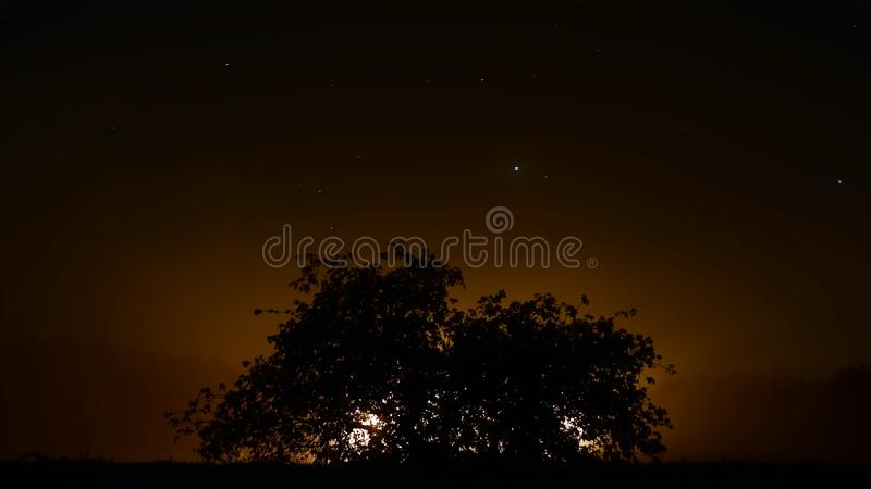 Silhouette tree / Sunset tree. Silhouette of tree on sunset background. Stars. Black sky. Silhouette. Beautiful sunset stock image