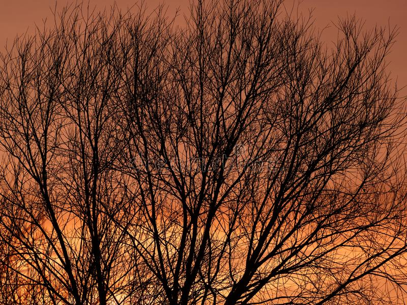 Silhouette of a tree at sunset. Beautiful sunset royalty free stock photography