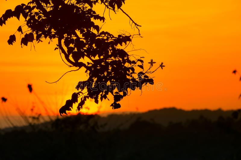 Silhouette tree and sunset beautiful colorful landscape in sky twilight time.  stock photos