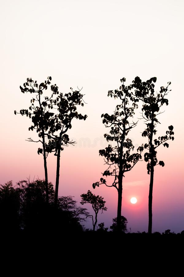 Silhouette of tree with sunset in the evening. Silhouette of tree with sunset in the evening stock images