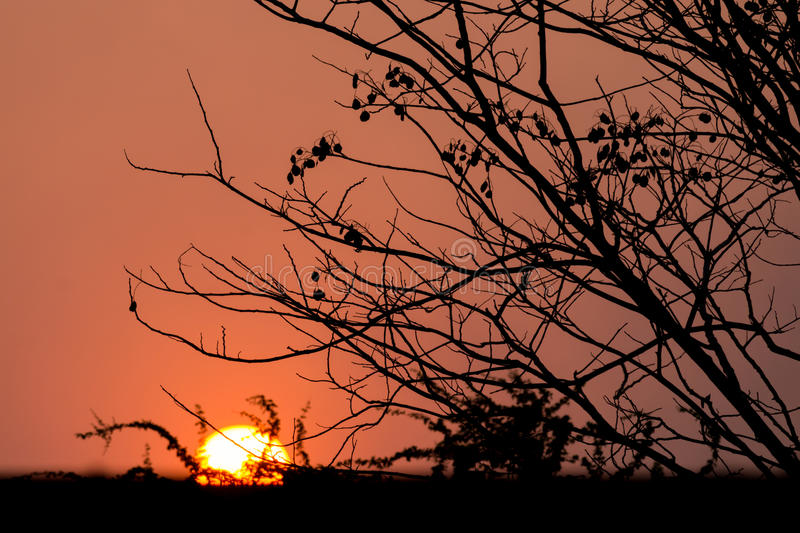 Silhouette tree at sunset royalty free stock images