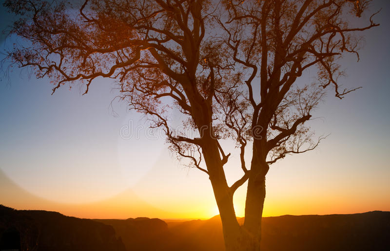 Silhouette Of Tree With Sunset Over Mountains stock photo