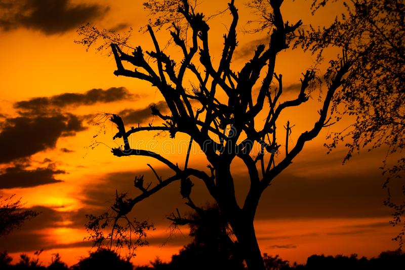 Silhouette of a tree at sunset stock photo