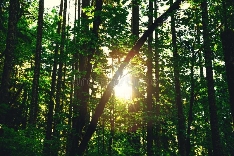 Silhouette Of Tree Trunks With Reflection Of Sun During Daytime Free Public Domain Cc0 Image