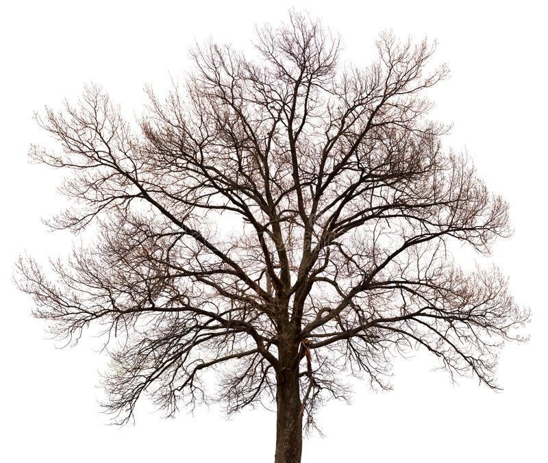 Silhouette of a tree on white background stock photography