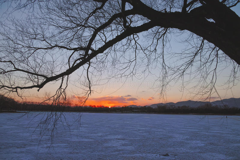 Download The Silhouette Of Tree In Winter Stock Photo - Image: 29530866