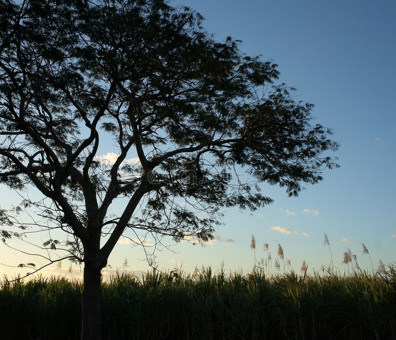 Silhouette Treen Arkivbild