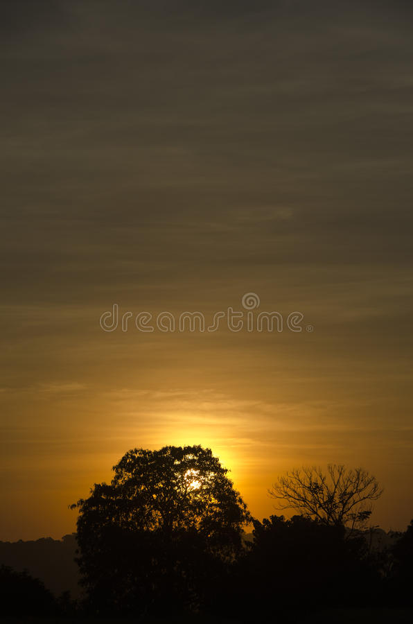 Silhouette of Trees Against Orange Sun during Sunsset royalty free stock image