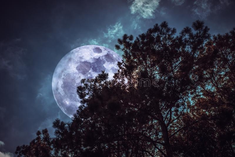 Silhouette of trees against sky and super moon over serenity nature background. View from below. Beautiful night landscape. Silhouette of trees against night sky royalty free stock photo