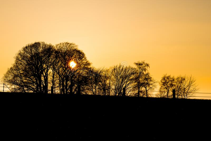 Silhouette of trees and fence in front of the orange sky of a sunset. Germany royalty free stock images