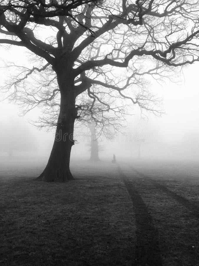 Silhouette of trees in fog stock photos