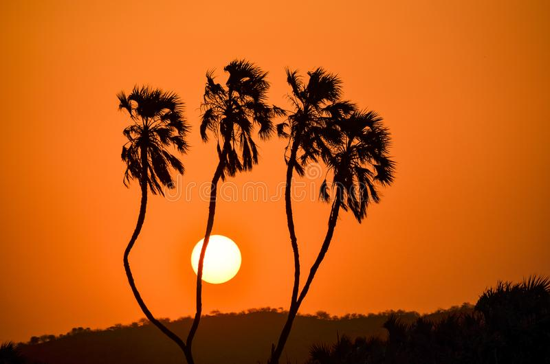 Silhouette of Trees during Golden Hour stock image