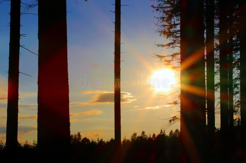 Silhouette of Trees during Golden Hour stock photography