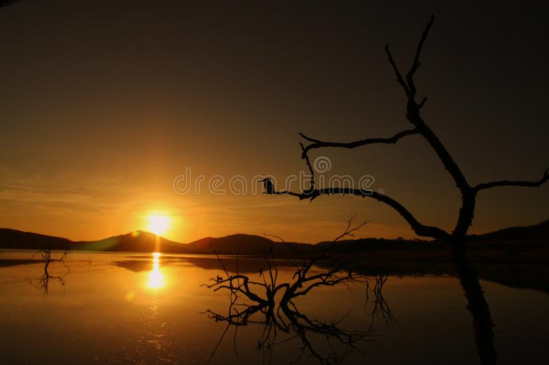 Silhouette of trees and king fisher. A calm scene off trees and a King fishernext to a open body of water just before sunrise stock photos