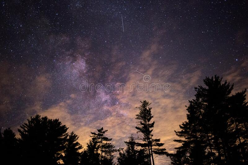Silhouette of Trees at Night stock images