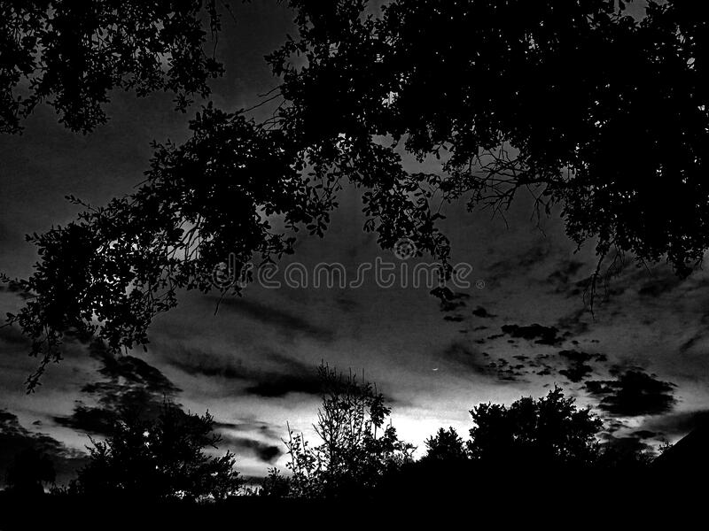 Silhouette of trees at night stock photography