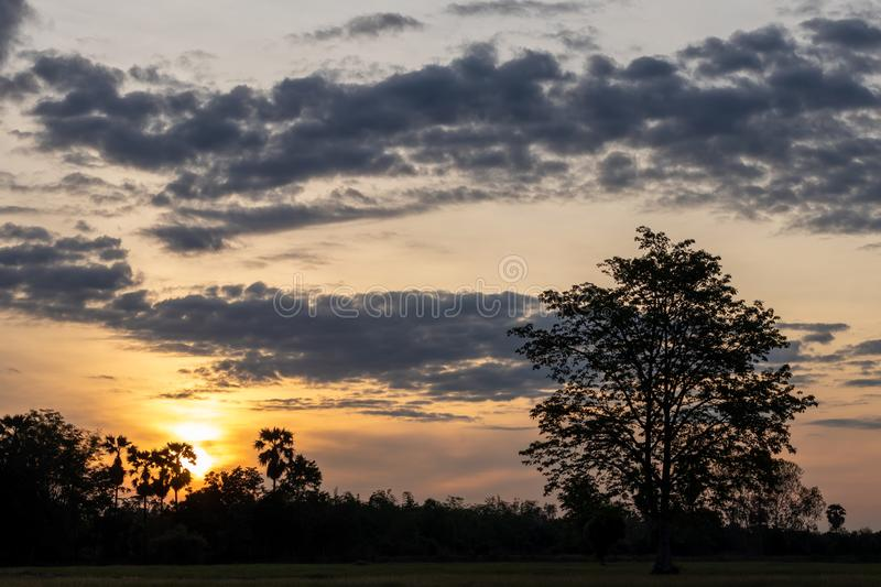 Silhouette of trees and sunlight in the countryside. The view of the Siluette trees under the cloudy clouds and early morning sunshine in a rural Thai royalty free stock photos
