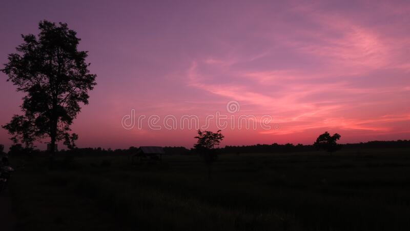 Silhouette of Trees during Sunset stock photo