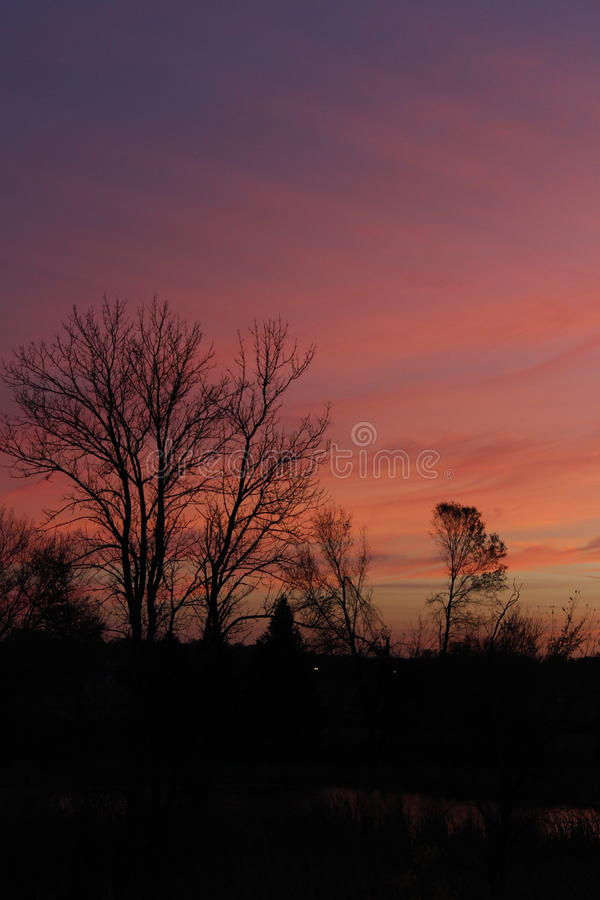 Silhouette of trees at sunset stock photography
