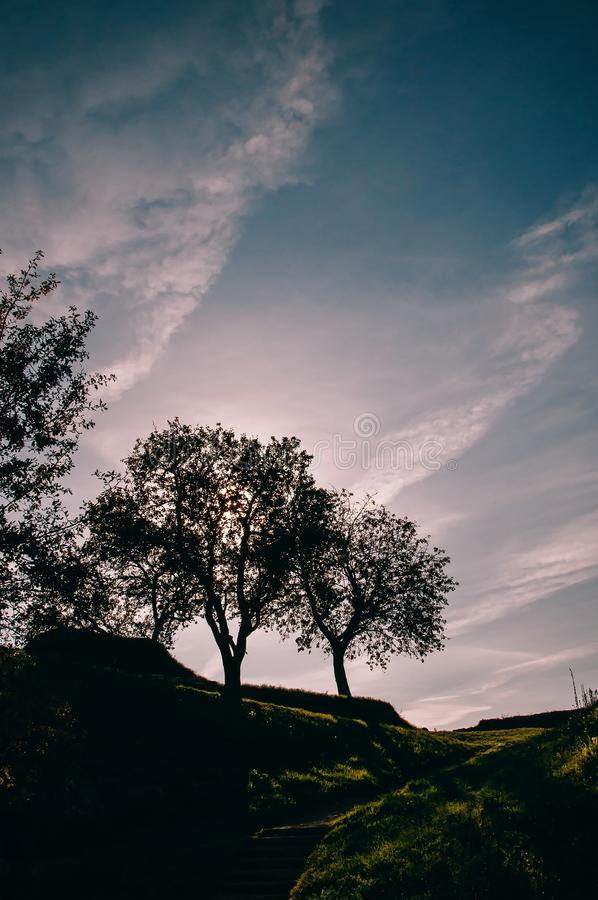 Silhouette Trees Under Blue Sky. With Sunset stock photos