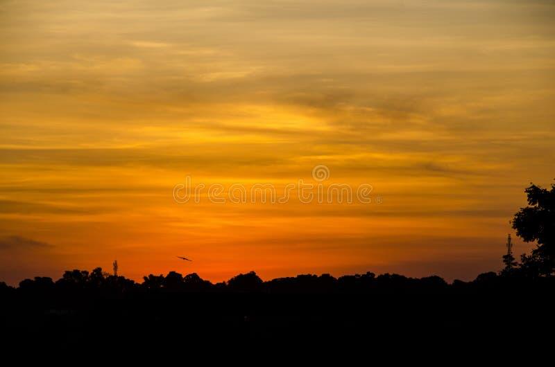 Silhouette Of Trees Under Orange Sky Free Public Domain Cc0 Image