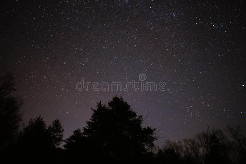Silhouette Of Trees Under A Sky Full Of Stars Free Public Domain Cc0 Image