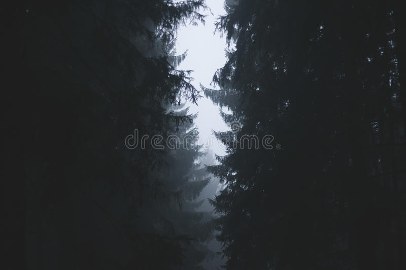Silhouette Of Tress With Fog During Daytime Free Public Domain Cc0 Image