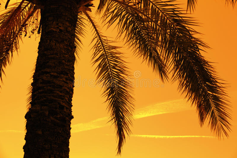 Silhouette of tropic palm tree royalty free stock photography