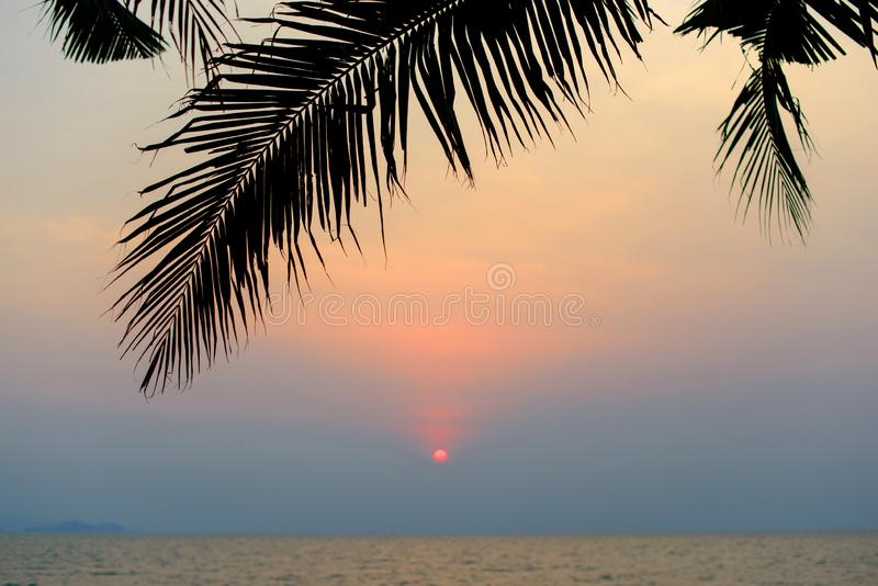 Silhouette of tropical coconut palm tree leaf at sunset. stock photography