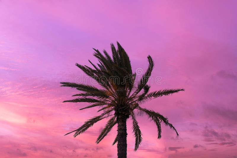 Silhouette tropical palm tree with sun light on sunset sky. Copy space. Summer vacation and stock photo