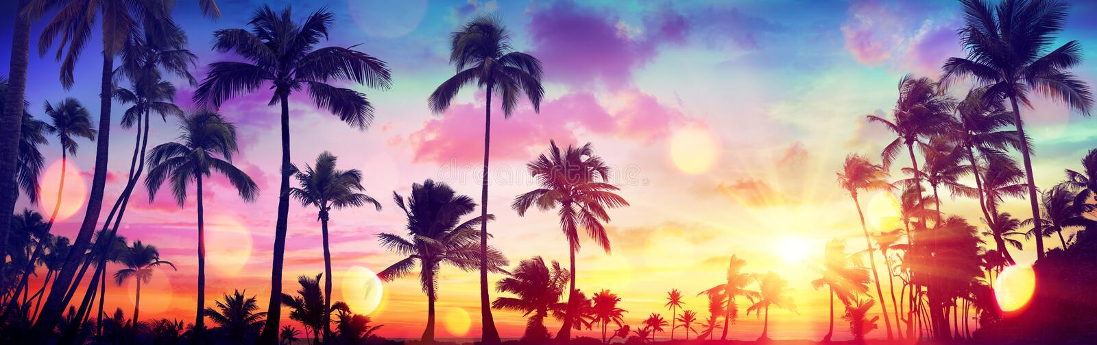 Silhouette Tropical Palm Trees At Sunset stock photos