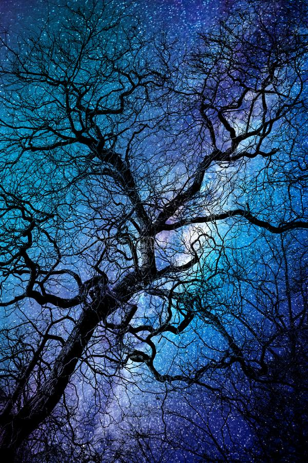 Silhouette of a twisted tree in winter, strary night background stock photography