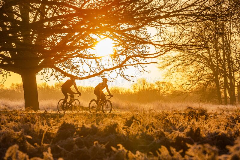 Silhouette of two men riding bicycles. royalty free stock photography