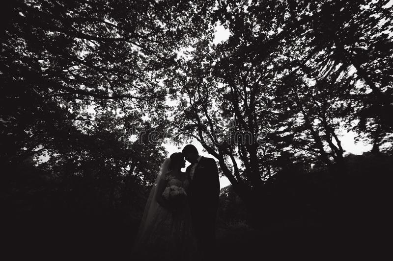 Silhouette of two people kissing. groom and bride on wedding.  royalty free stock images