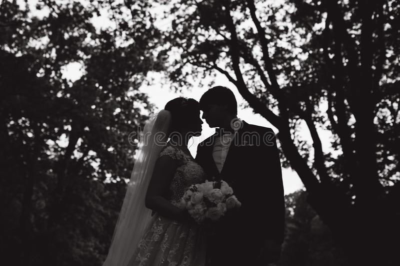 Silhouette of two people kissing. groom and bride on wedding.  royalty free stock photography