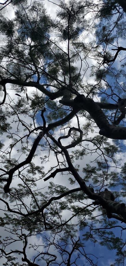 Silhouette van een uniek boombladerdak in een park in Okinawa Japan royalty-vrije stock afbeeldingen