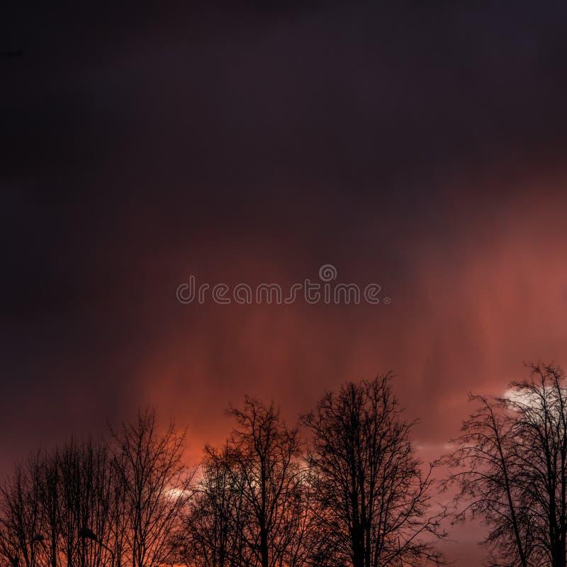 Silhouette View of Trees Under Dim Sky stock photos