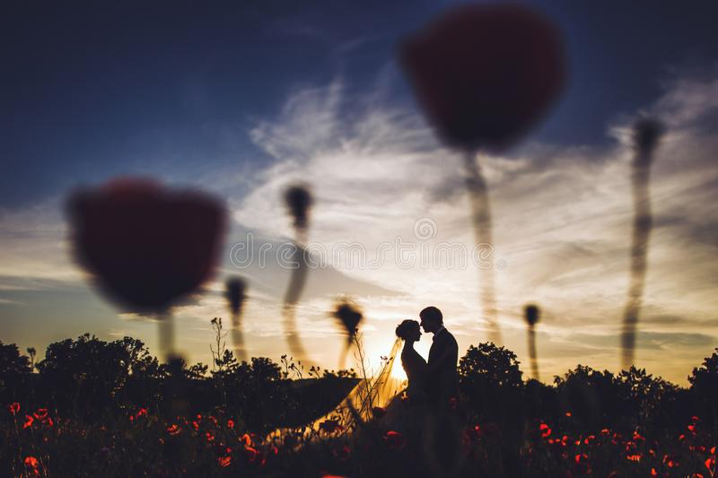 Silhouette wedding couple outdoor at amazing sunset through poppy flowers stock photos