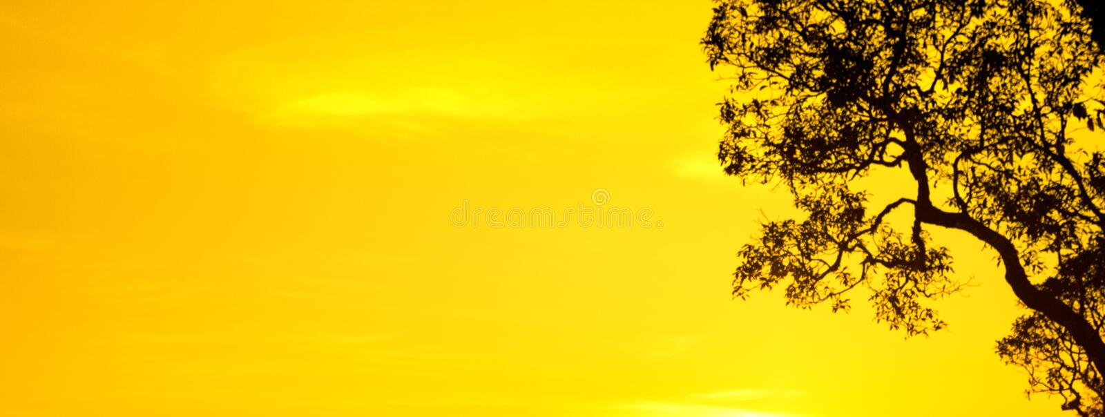 Silhouette yellow sky and tree wallpaper and background. Sunset silhouette . view silhouette yellow sky and tree wallpaper and background royalty free stock photo