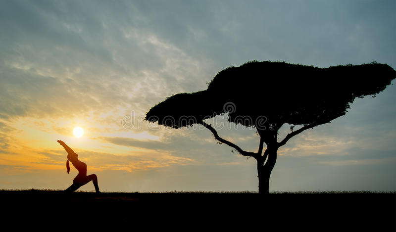Silhouette yoga young woman with alone tree stock images