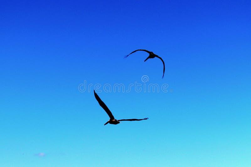 Silhouetted птицы стоковые фотографии rf