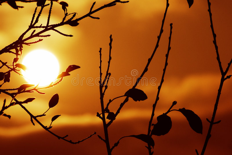 Silhouetted stock images