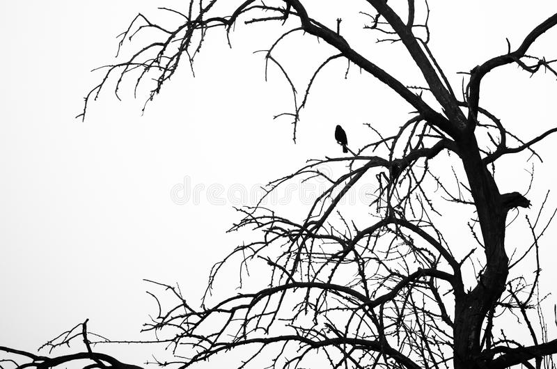 Silhouetted Bird Perched in a Tree against a White Background royalty free stock image