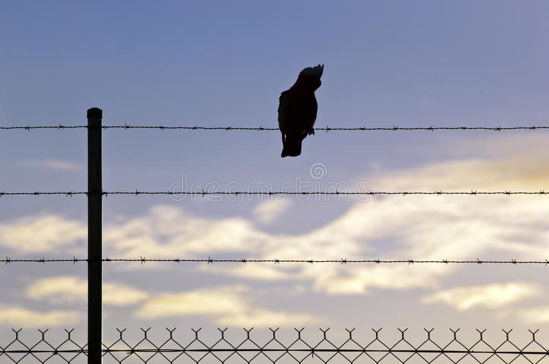 Silhouetted Bird on Wire stock images
