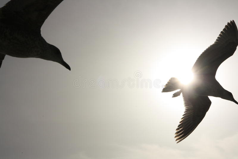 Download Silhouetted Birds In Flight Stock Image - Image: 18768655
